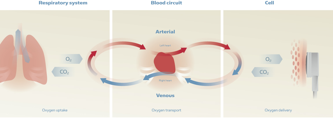 TC Blood Circuit layout